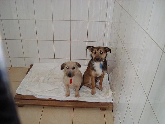 Šunelių šeimyna (PATINĖLIS NUMARINTAS)