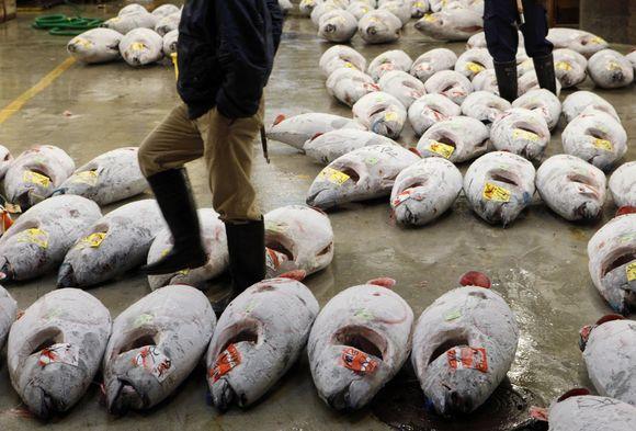 Tsukiji žuvų turgus