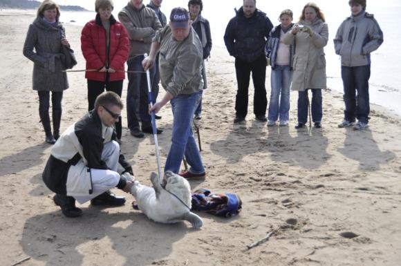 Per šventinį savaitgalį paplūdimiuose rasti trys ruoniukai.