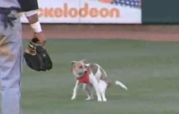 Netikėtai aikštelėje pasirodęs šuo trumpam sustabdė MiLB lygos rungtynes
