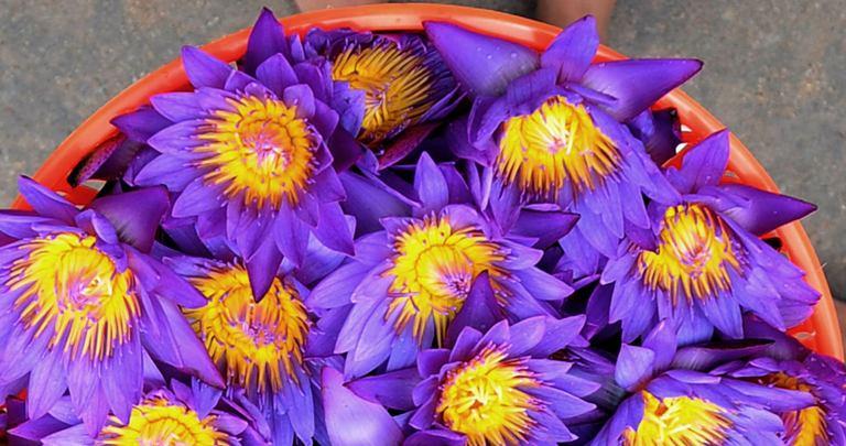 Gėlės