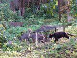 """""""Lesės"""" nuotr./Benamės katės sugaunamos, sterilizuojamos ir paleidžiamos į laisvę."""