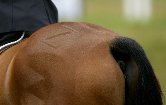 AOP nuotr./Anglijos karalienės Elizabeth II anūkės Zaros Philips žirgas