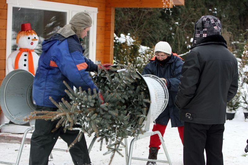 Raudondvario medelynas iki Kalėdų lankytojams bus atviras septynias dienas per savaitę. Pirkėjai į jį plūsta nuo pirmųjų gruodžio dienų.