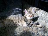 15min.lt skaitytojos Jovitos nuotr./Katinas Tigras