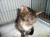 """""""Lesės"""" nuotr./Piktavalio chemikalais aplietas katinėlis prarado regėjimą ir koordinaciją."""