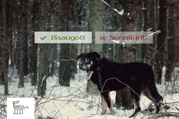 VaĮ Penkta koja/Penktos kojos sukurta socialinė reklama