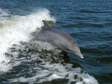 Reuters/Scanpix nuotr./Delfinas laisvėje