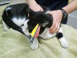"""""""Reuters""""/""""Scanpix"""" nuotr./Strėlė pervėrė katino Maxo galvą."""