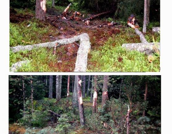 Sauliaus Sinkevičiaus/manorajonas.lt nuotr./Iš kelio išskriejęs automobilis padarė miške proskyną.