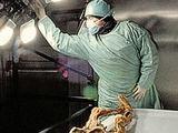 kp.ua nuotr./Pirmąja Ecio auka tapo mumijos autopsiją atlikęs teisės medicinos ekspertas.