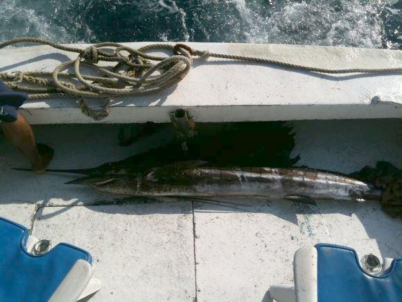 15min.lt skaitytojų nuotr./Žūklės laimikis, Andrius sailfish, pagauta Meksikoje