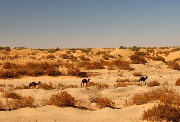 Novaturo nuotr./Didžiausią pasaulyje Sacharos dykuma