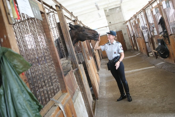 Raitosios policijos žirgai