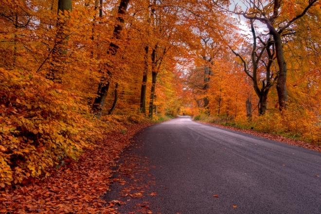 Kelias rudenį