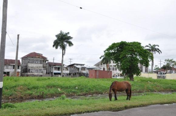 Greitgrisim.lt nuotr./Apleisti Gajanos sostinės pastatai