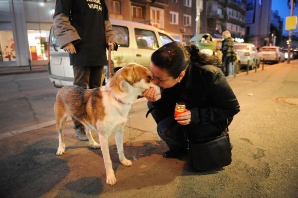 Rumunijos parlamentarai nepaisė gyvūnų globėjų protestų.