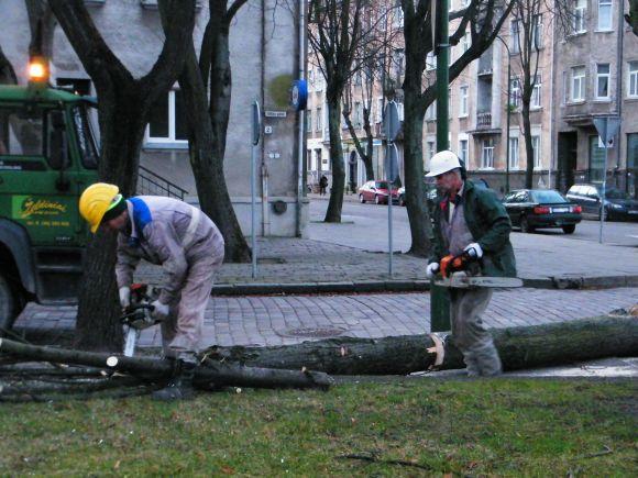 Pirmadienio rytą Klaipėdoje buvo šalinami uragano padariniai.