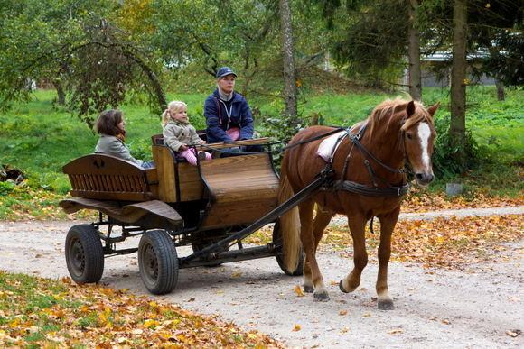 Po Kurtuvėnų reg. parką smagu pasivažinėti žirgų traukiama brička