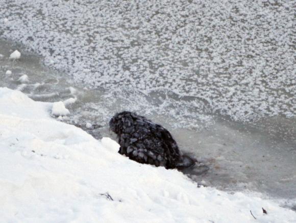 Ant ledo gulėjo leisgyvis gyvūnėlis.