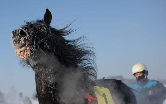 Tomo Lukaio/BFL nuotr./Žirgų lenktynių Sartuose akimirka