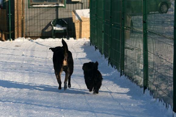 SOS gyvūnų nuotr./SOS gyvūnų prieglaudos globotiniai