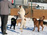 SOS gyvūnų nuotr./SOS gyvūnų prieglaudoje