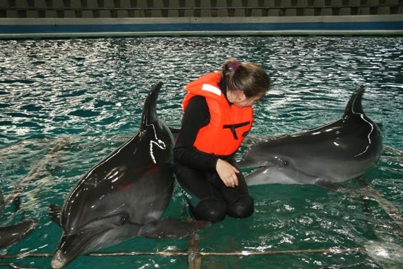 Delfinai į Jūrų muziejų sugrįš tik po rekonstrukcijos.