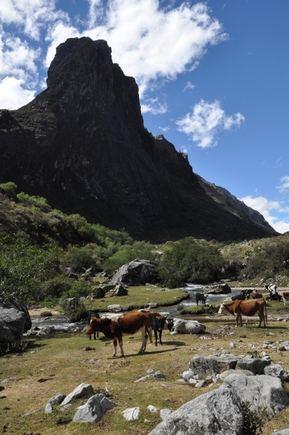 Santa Kruzo takas prasideda karvių kaimenėmis ir stačiomis uoluomis