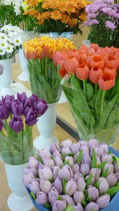 Organizatorių nuotr./Tulpės