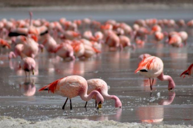 Greitgrisim.lt nunotr./Flamingai