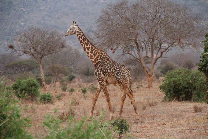 Asmeninio archyvo nuotr./Safaris