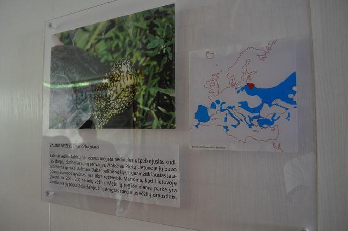M.Vadiaio nuotr./Терриитория, где проживают болотные черепашки.