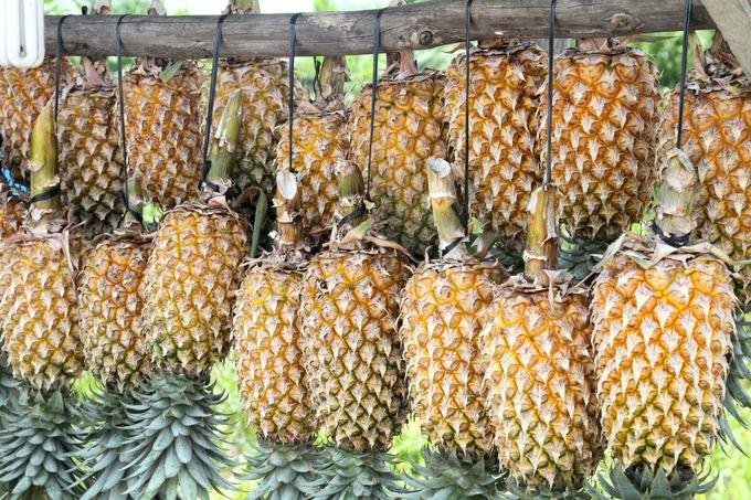 Evelinos ir Karolio nuotr./Pigūs pakaruokliai ananasai aalia kelio