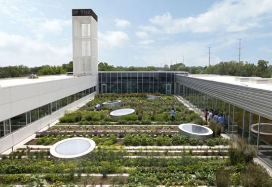 Kai kurie restoranai ant stogo užsiaugina nemažą dalį daržovių bei žalumynų.