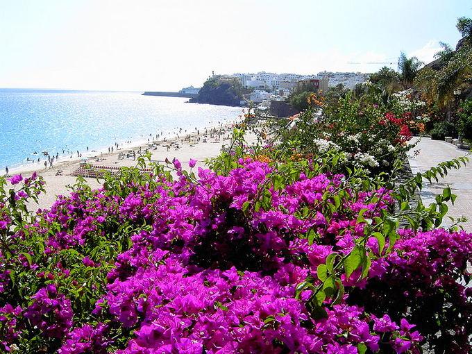 wikimedia.org nuotr./Paplūdimys Fuerteventūros saloje