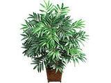 Bambliuotoji palmė