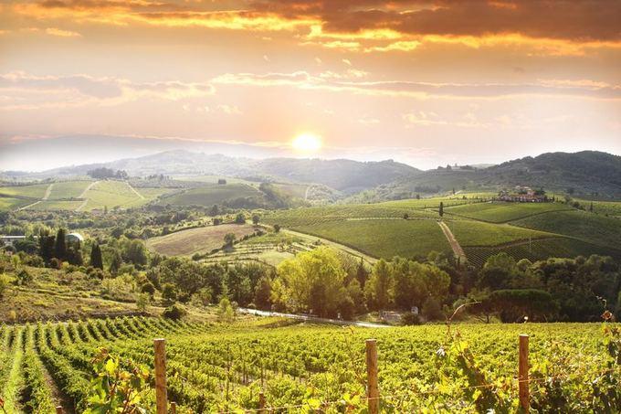 123rf.com nuotr./Toskana Italijoje garsėja savo vynuogynais