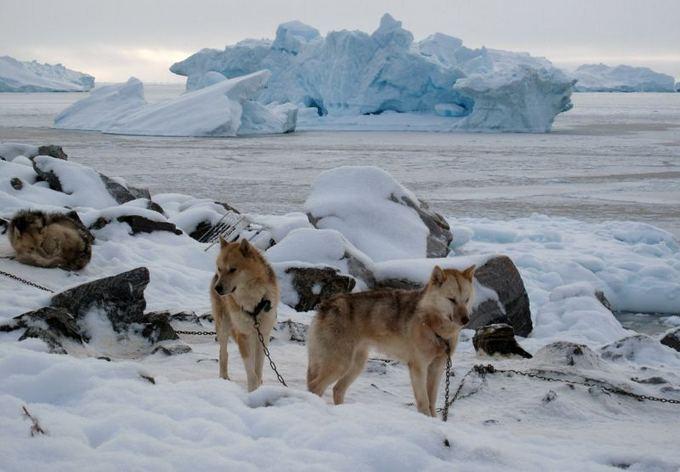 Scanpix nuotr./Klasikinė Grenladjos transporto rūais - aunų kinkiniai