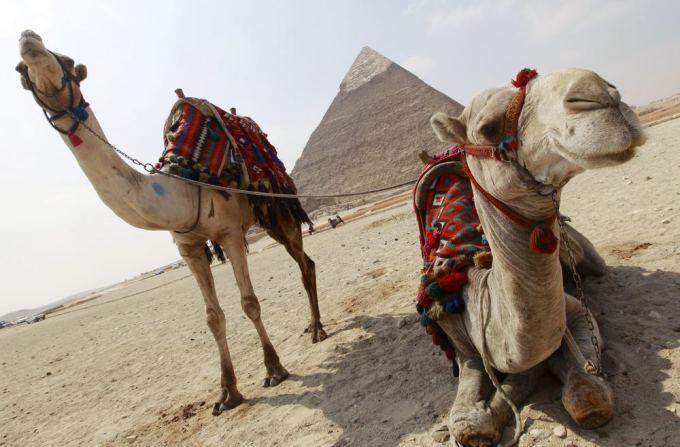AFP/Scanpix nuotr./Pasaulio gyvūnai: kupranugaris