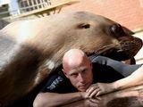 Jūrų liūtas Piratas ir treneris Filipas