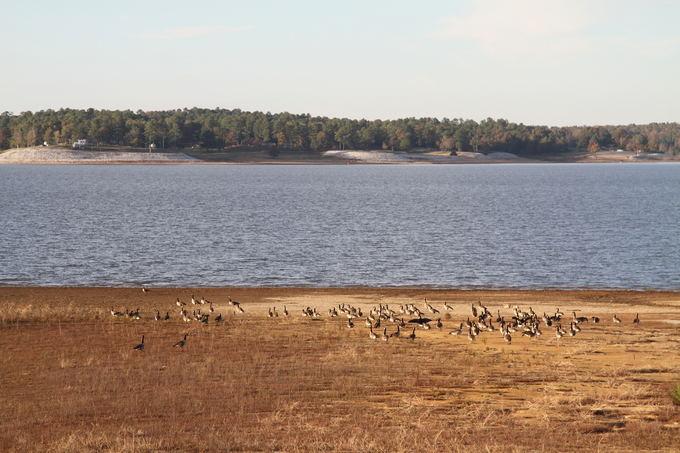 Evelinos ir Karolio nuotr. /Mums daug mielesnis nei Memfio miestas Edik ežeras