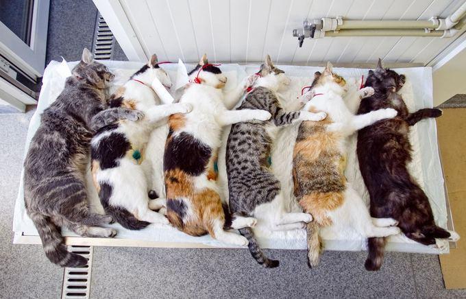 Irmanto Gelūno/15min.lt nuotr./Katės po atliktos sterilizacijos.