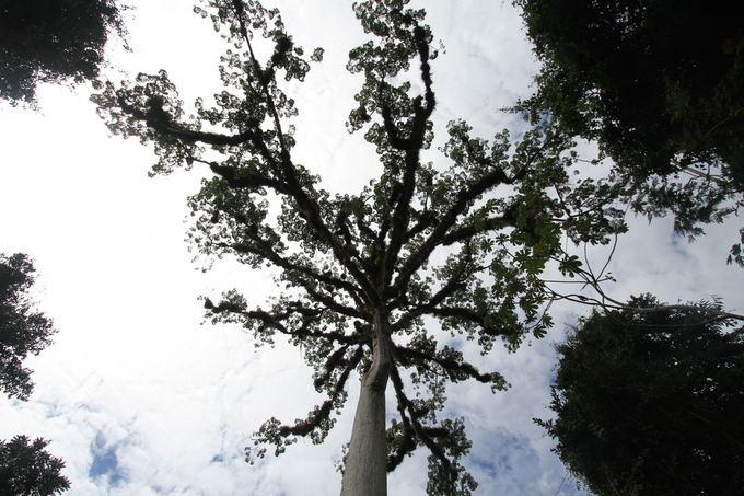 Evelinos ir Karolio nuotr./Stebinančių formų ir grožio flora
