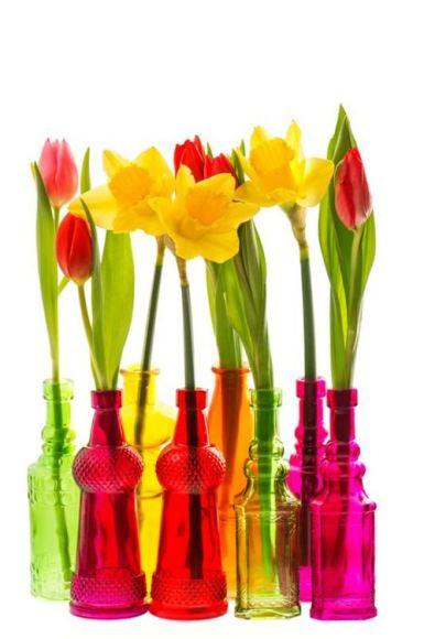 Shutterstock nuotr./Tulpės ir narcizai