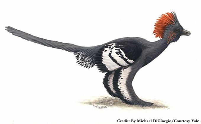Pirmykštis paukštis su keturiais sparnais