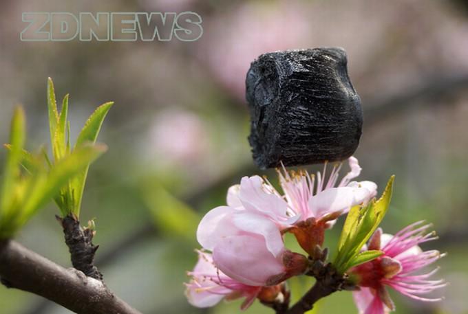 Džendziango universiteto (Kinija) mokslininkai paviešino fotografijas, kuriose lengviausią pasaulyje medžiagą išlaiko trapūs gėlių žiedų kuokeliai.