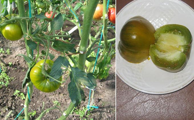 Asmeninio archyvo nuotr. / Kiwi pomidorų veislė