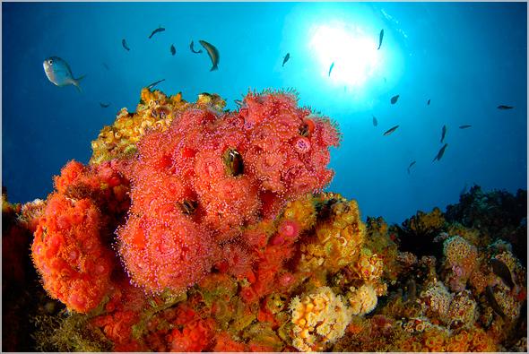 Wikimedia.org nuotr./Robinzono Kruzo slaa laukia nuotykių ir istorinių laikų ieakotojų