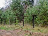 Aldo Liauko nuotr./Местами еще сохранилась стена, отделявшая Литву от Запада